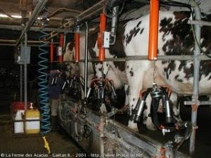Rudolf Steiner pronosticó sobre las vacas locas 162-sala-ordeno-las-vacas