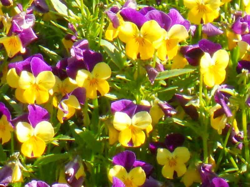 Sistemasolarunido - Como cuidar las plantas de exterior ...